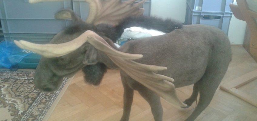 Oprava dekorativního losa