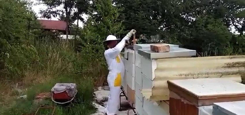 Úpravy včelstev před zazimováním