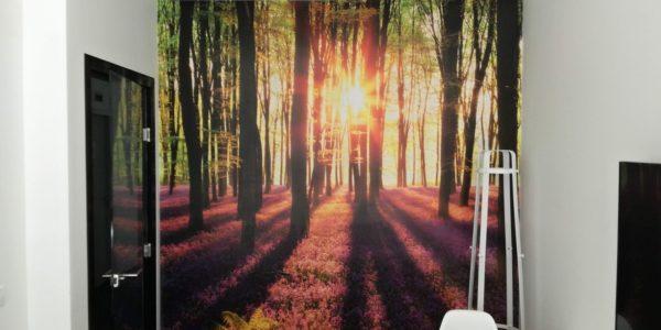 Tapetování fototapeta rozkvetlý les